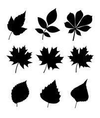 Silhouettes of leaves. Leaves various trees and seeds (poplar, elm, chestnut, maple, birch, ash). Vector collection of leaf isolated on white background.
