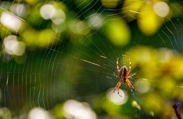 spider in the web on beautiful foliage bokeh