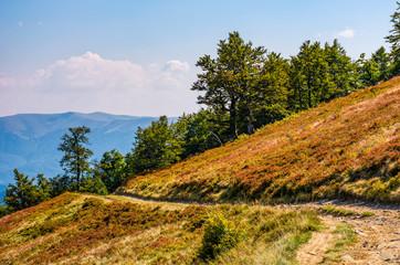 dirt road through hillside with beech trees