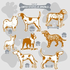Dogs breeds of the world vector draw and shilouette on isolated illustration by countries with names, United States of America