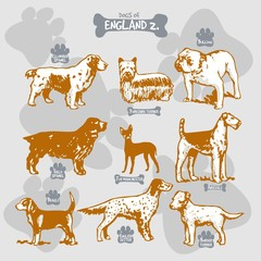 Dogs breeds of the world vector draw and shilouette on isolated illustration by countries with names, England 2