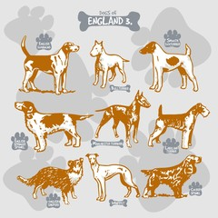Dogs breeds of the world vector draw and shilouette on isolated illustration by countries with names, England 3
