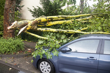 Abgebrochener Ast beschädigt geparktes Auto