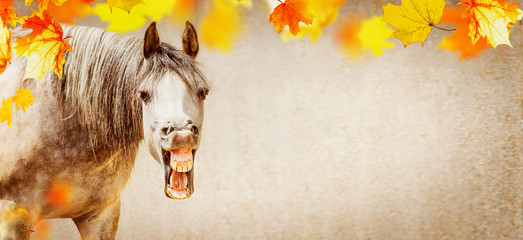 Autumn horse background with funny horse face with open mouthed and falling colorful  leaves, banner
