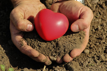 Man holds red heart in palms/White man holds red heart in palms with soil.