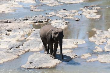 Elephant Orphanage in Pinnawala