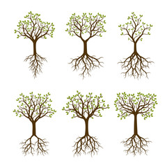 Set of Color Trees with Roots. Vector Illustration.