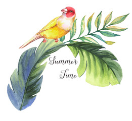 Hand drawn watercolor illustration of colorful finch bird with banana leaves isolated on the white background