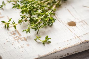 Thyme branches on a light background