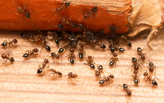 Ants on a wooden background