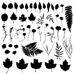 Big natural design elements floral set. Graphic collection with leaves and flowers elements. Spring summer design for invitation, wedding or greeting cards. Black silhouette, white background. Vector
