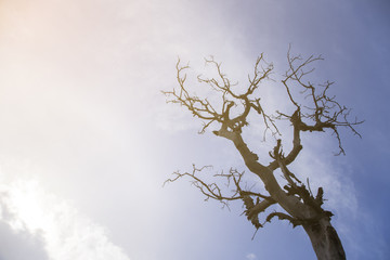 Dry trees die and sun burns with drought.