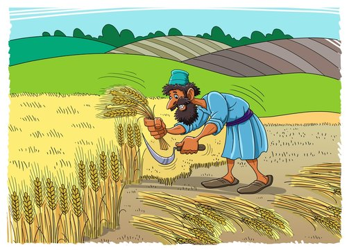 Reaper on the field collecting the wheat harvest