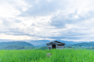 Cottage on the rice field in a cloudy day.