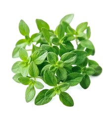 Thyme fresh herb isolated .