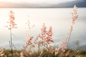 Beautiful romantic pastel sunbeam and reflection on lake landscape with meadow at sunset in Kuiburi...