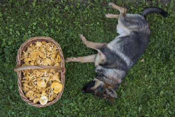 Mushrooming with a Dog