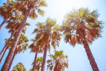 Palm trees at Ichmeler beach Turkey.