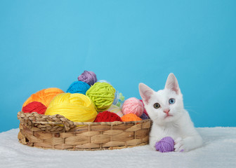 Small white kitten with heterochromia, or odd-eyed, next to a brown basket with colorful balls of yarn, one ball in paws looking at viewer. Blue background with copy space