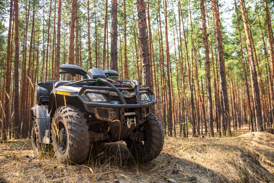 ATV Quadbike in a pine forest