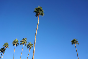 tropical palm trees under blue sky