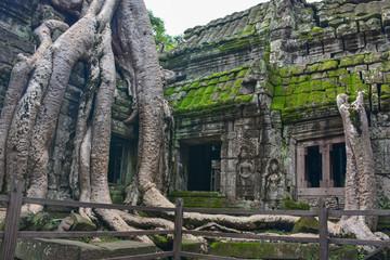 Angkor Wat, Ta Prohm Temple, Siem reap, Cambodia.