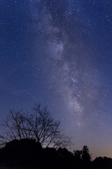 Milky Way in Wine Country