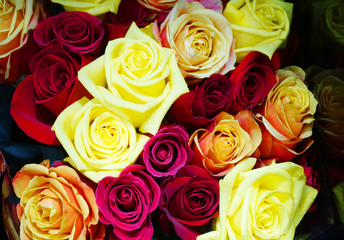 Wall Mural - close up on colorful rose in a bouquet