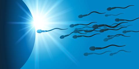 fécondation - reproduction - ovule - spermatozoïde - ovulation - fertilité