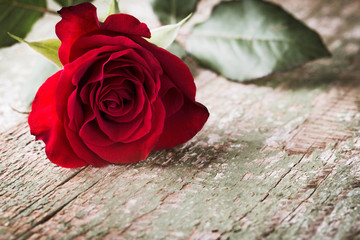 Red rose on old wooden background  - Condolence