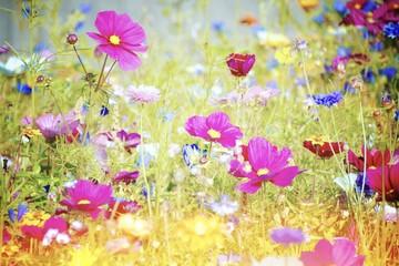 Wall Mural - Blumenwiese - Sommerblumen