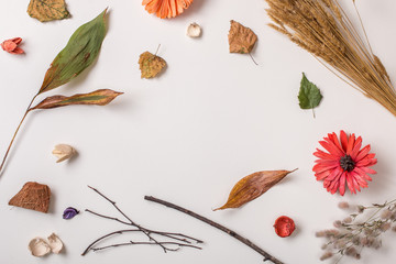 Autumn creative set of dry plants: fallen autumn leaves, dried flowers and petals, simple rustic branches. White background with copy space for text. Top view. Flat lay.