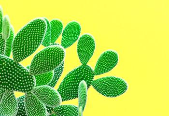 Foto op Plexiglas Cactus Cactus Fashion Set. Sweet Summer Style. Art gallery Design. Minimal fashion Stillife. Vanilla Trendy Bright Colors. Green Neon Cactus Mood, Surrealism. Creative Unusual Fun. Yellow background