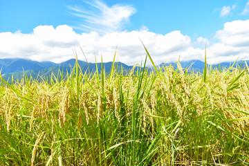 信州 田園風景