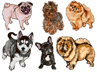 Colorful set of illustrations of dogs of different breeds
