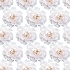 White rose pattern. Beautiful flower in garden. Floral background