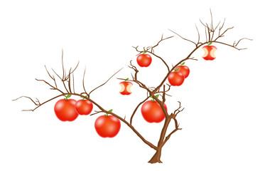 Apples on dead Tree Branch Vector