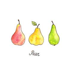 watercolor drawing pears