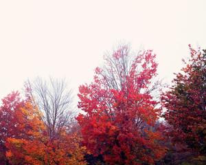 Vintage fall or autumn foliage
