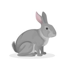 Isolated farm rabbit.