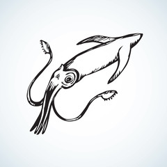 Squid. Vector drawing