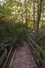 Oasi di Serranella, paludi, pontile e boscaglia