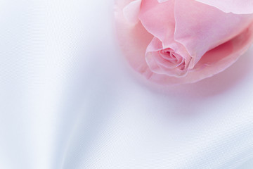 close up of pink rose on white fablic