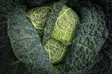le cœur d'un choux entouré de ses feuilles vertes