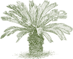 small tropical palm tree