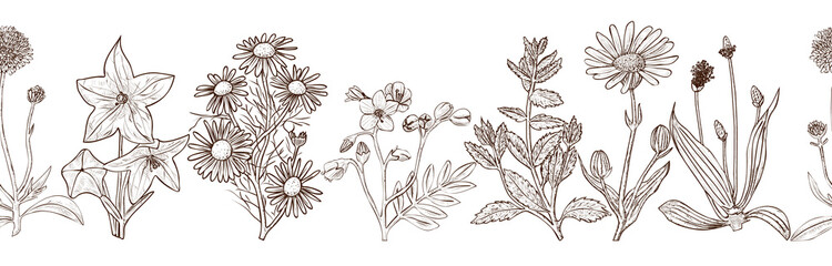 Seamless vector pattern with ink hand drawn medicinal herbs