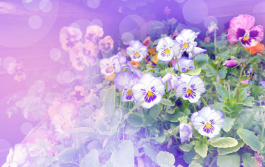 The corner of Daily flower with light effect in dream concept