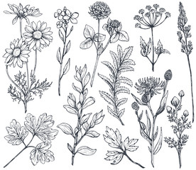 Hand drawn flowers and herbs vector set