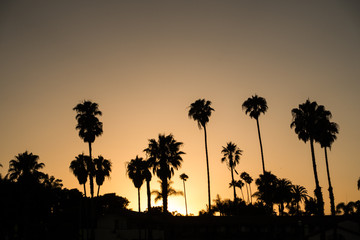 Silhouette of palms on Santa Barbara beach