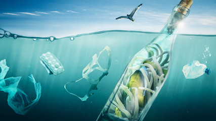 Fish travels in a bottle over the sea